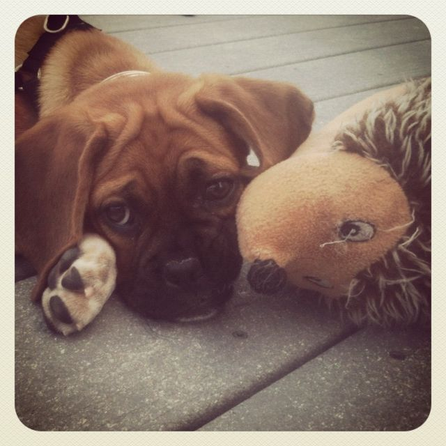 Bijou with her hedgehog.
